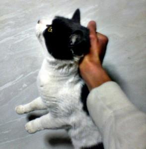Cat_Scruff