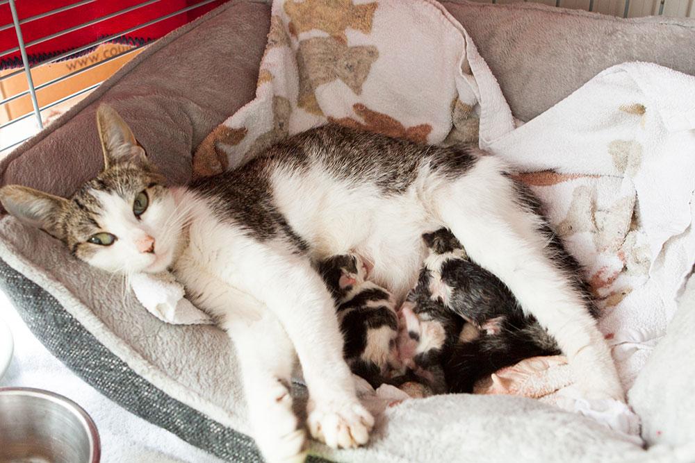 Moederpoes met zogende kittens