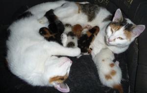 Moederpoes_met_kittens