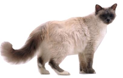 Bejaarde_kat