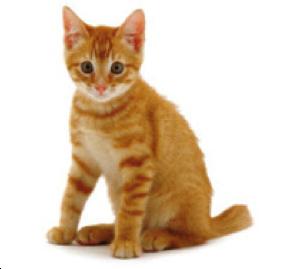 Kitten_kat