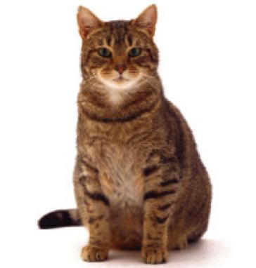 Middelbare_leeftijd_kat