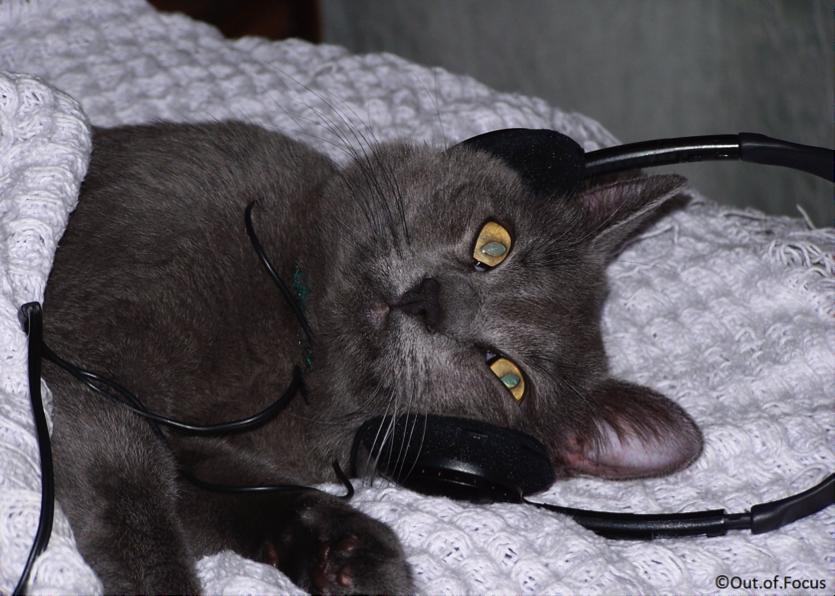 Muziek voor katten