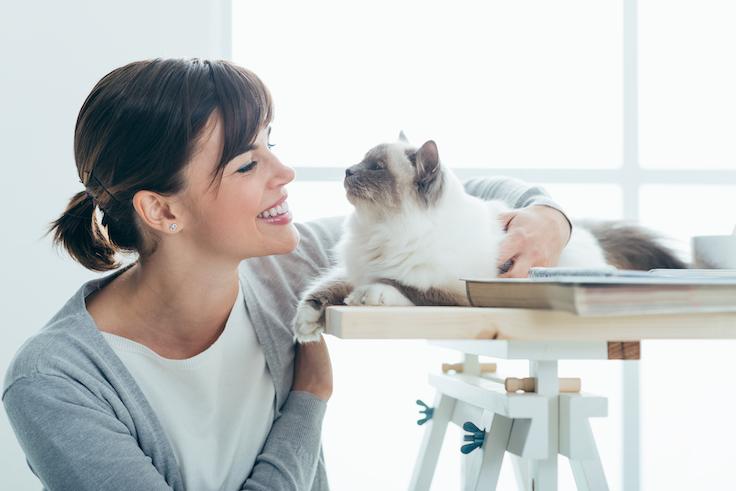 Katteneigenaren begrijpen en bereiken. Hoe doe je dat als professional?