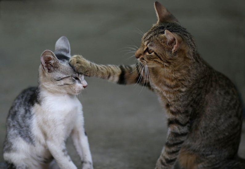 Kat accepteert kitten, maar geeft wel zijn grenzen aan.
