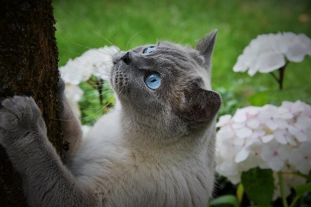 kat krabt aan boom