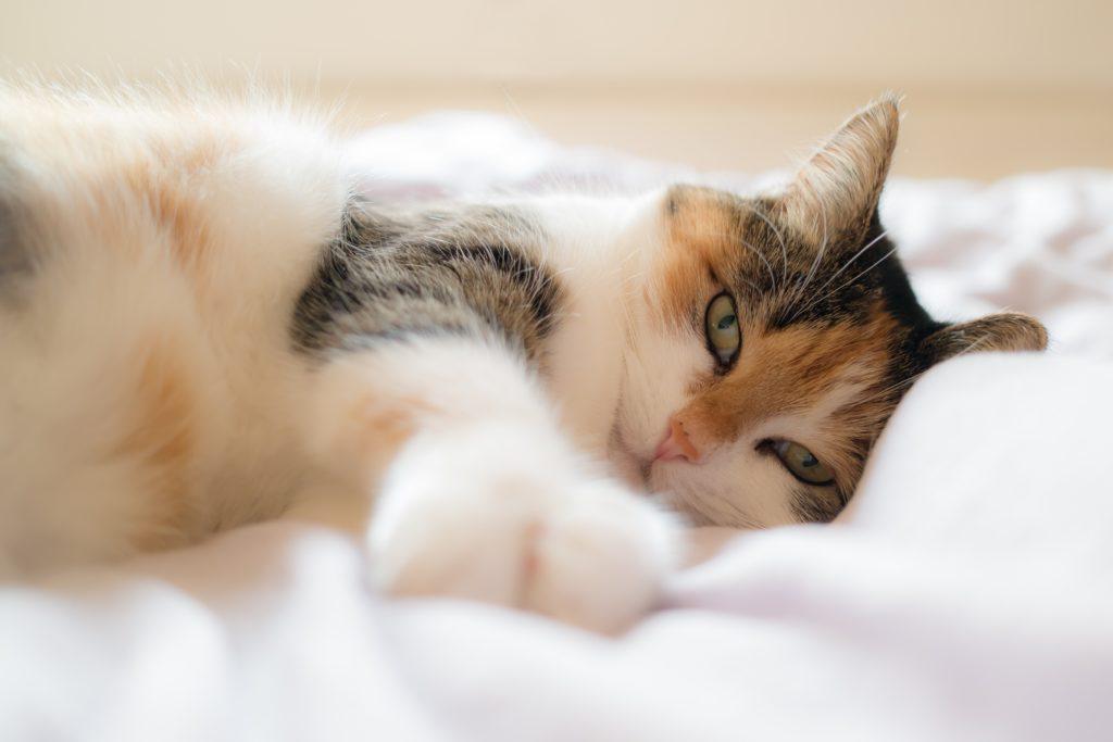 Help je kat bij het herstel na ziekte of letsel